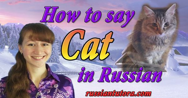 How to say cat in Russian translation